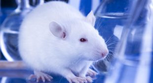 Are We Getting Closer to an Animal Testing Ban in the US?