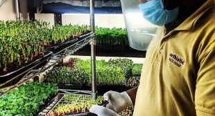 Bengaluru Chef Delivers Affordable 'Live' Microgreens At Your Doorstep, Helps You Grow Them