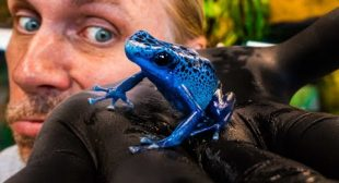 DEADLY POISON DART FROG!! WILL IT KILL YOU?? | BRIAN BARCZYK