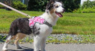 Simple Tips to Exercise Your Dog and Stay Healthy
