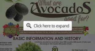 The Avocado Oil Fraud
