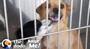 Bonded Dogs Who Fell In Love At The Vet Are Looking For A Home Together | The Dodo Adopt Me!