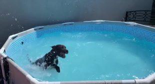 Dog has fun splashing water in the pool