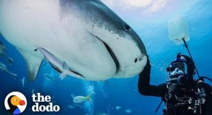 Guy And Wild Shark Have Been Best Friends For Decades  The Dodo Wild Hearts