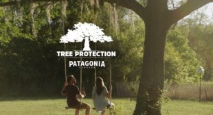 This Beer Will Replace Your Favorite Tree If a Hurricane Knocks It Down