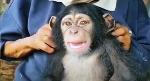 Cute And Funny Monkey Videos Compilation 2020 [Funny Pets]