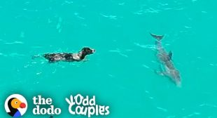 Dog And Wild Dolphin Play Whenever They See Each Other   The Dodo Odd Couples