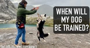 How Long Does it Actually Take to COMPLETELY Train a Dog?