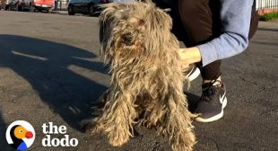 Matted Stray Dog Finally Gets A Haircut | The Dodo