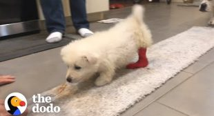 Puppy Grows Up So Strong To Inspire Kids Just Like Her   The Dodo Heroes