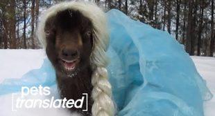Talking Animals Celebrate Halloween   Pets Translated