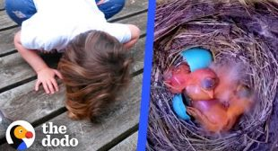 Watch These Baby Robins Hatch And Flap Their Wings For The First Time   The Dodo