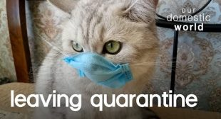Your Pets Can Finally Leave Quarantine   Our Domestic World