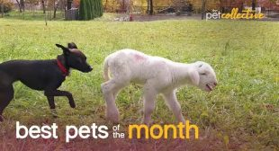 Best Pets of the Month (November 2020) | The Pet Collective