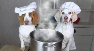 Chef Dogs Make Soup: Funny Dog Maymo & Potpie Make Their Favorite Soup Recipes