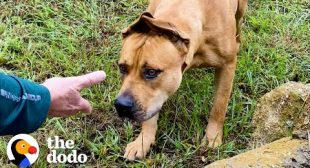 Couples Spends A Year Trying To Rescue A Stray Dog…Then This Happens | The Dodo Faith = Restored