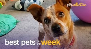 Does This Dog Think He's A Turkey? | Best Pets of the Week