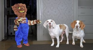 Dogs vs Evil Teddy Bear Prank! Funny Dog Maymo & Popie Creepy Teddy Pranks