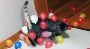 🐱🎈Cat Reaction to Playing Balloon 😂🎈😂 Funny Cat Balloon Reaction Compilation 🎈🐱 [Funny Pets]