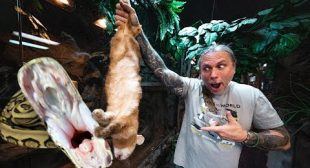 FEEDING A HUGE RABBIT TO MY GIANT SNAKE!! brian Barczyk
