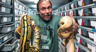 MOVING MY ENTIRE BALL PYTHON COLLECTION!! | BRIAN BARCZYK