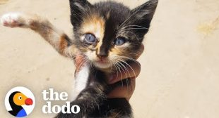 Tiny Kitten Runs Out Of Bushes To Her New Mom   The Dodo Little But Fierce