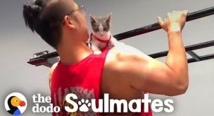 Tiny Stray Kitten Follows Guy Home And Never Leaves | The Dodo Soulmates