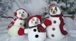 Funny Dogs in Christmas Costumes Compilation! Funny Dog Maymo, Penny & Potpie Dress Up for Holiday