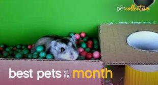 Best Pets of the Month (January 2021)   The Pet Collective