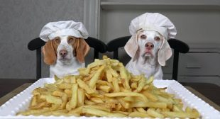 Chef Dog vs Chef Dog: French Fries Edition – Who Makes the Best?