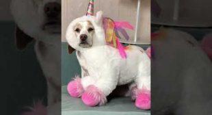 Do unicorns exist? #shorts