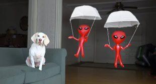 Dog vs. Aliens in Parachutes Prank: Funny Dog Maymo Pranked by Alien
