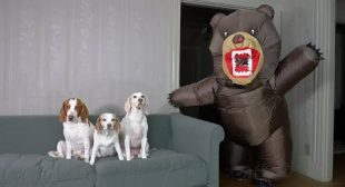 Dogs vs Evil Teddy Bear Prank: Funny Dogs Maymo, Penny, & Potpie