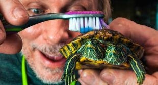 GIVING MY TWO HEAD TURTLE A BATH!! | BRIAN BARCZYK