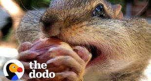 Guy's Best Friends With 14 Wild Chipmunks | The Dodo Wild Hearts