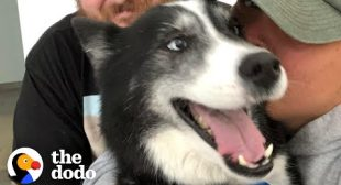 Lost Dog Ends Up 300 Miles Away From Home | The Dodo