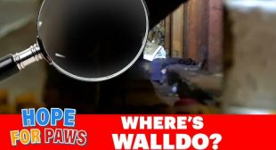 Scared cat sends the first rescuer to the hospital with serious injuries.