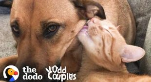 Watch This Dog And Cat Start Wrestling Each Other | The Dodo Odd Couples