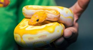 97 of my FAVORITE NEW SNAKES!! | BRIAN BARCZYK