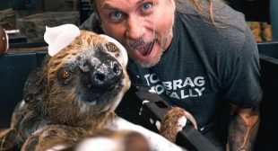 BETTER WAY TO BATH OUR SLOTH DROGO!! | BRIAN BARCZYK