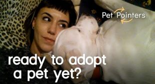 Pet Pointers: Are you & your partner ready to adopt a pet?