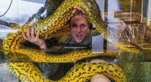 PLAYING WITH THE LARGEST SNAKES IN THE WORLD!! | BRIAN BARCZYK