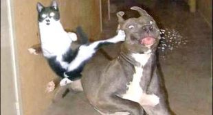 SLAMMY CATS – How funny can they get? 😂