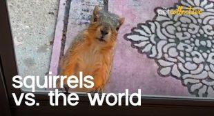Squirrels vs The World