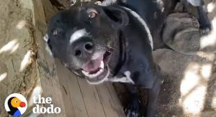 Takis Finds Dog Who Spent His Life On A Chain | The Dodo