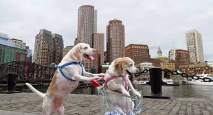 Dog Takes Dog to Vote in Shopping Cart: Funny Dogs Maymo & Penny Shopping Cart Voting Adventure