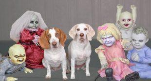 Dog vs Little Zombies Apocalypse! Funny Dogs Maymo & Potpie Open Zombie Kids Daycare
