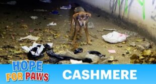 15 year old dog abandoned in a cemetery late at night. Loreta had to be rescued too!