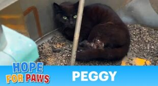 Cat accepted she was going to die as maggots ate her rotting flesh. WARNING – not easy to watch.