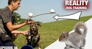 How I'm using 12 Baseballs to STOP HIM from CHASING SQUIRRELS 🐿 [REALITY DOG TRAINING EP 15]